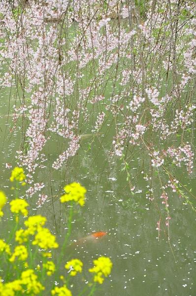 3相野の花16.04.03
