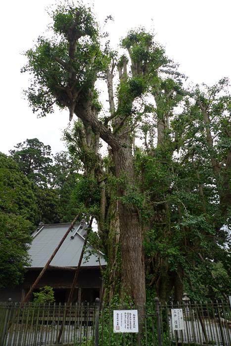 駿河の神社  村山浅間神社  11