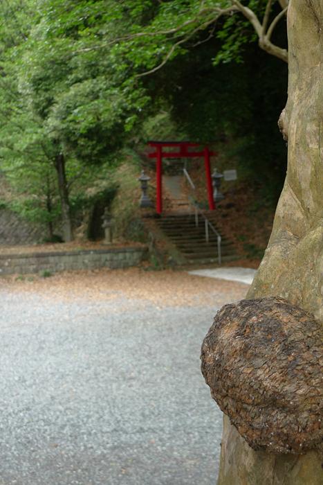 駿河の神社  村山浅間神社  7