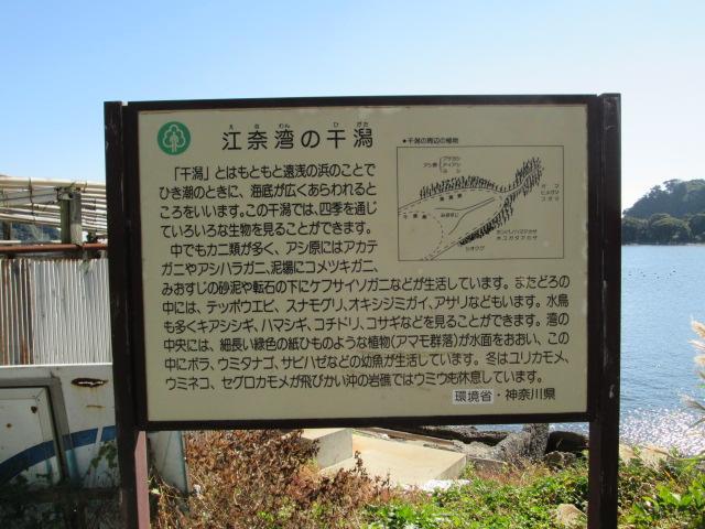 三崎 020