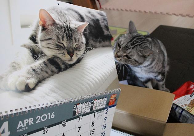 2016年カレンダー( 日本ペットフード株式会社様)