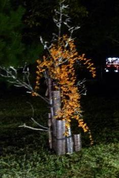 竹燈夜 2015