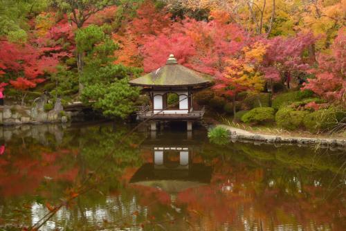 紅葉渓庭園 2015 秋 鳶魚閣