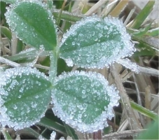 霜着き拡大写真