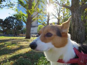 ブログ用+009_convert_20151127144149