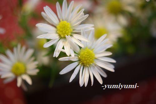 白いお花1