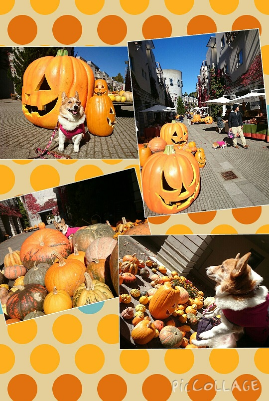 Collage 2015-10-3021_47_56