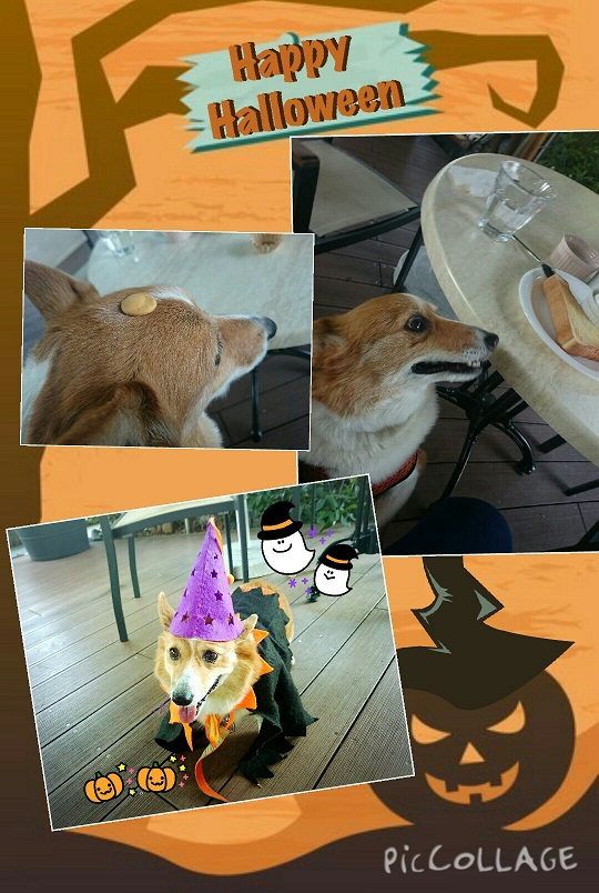 Collage 2015-10-3021_56_15