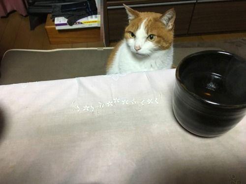 ブログNo.528(普通の猫っぽい)1