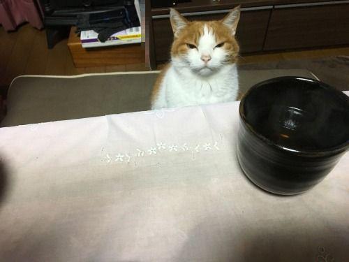 ブログNo.528(普通の猫っぽい)2
