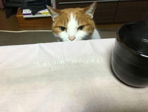 ブログNo.528(普通の猫っぽい)3