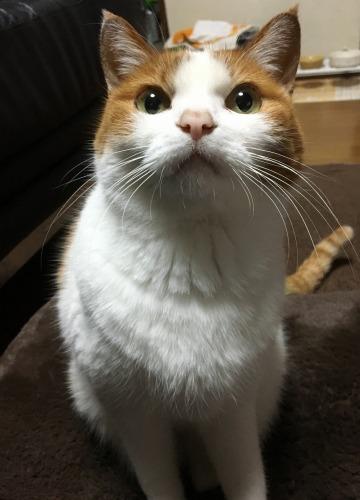 ブログNo.539(お出迎え猫と宝物)9