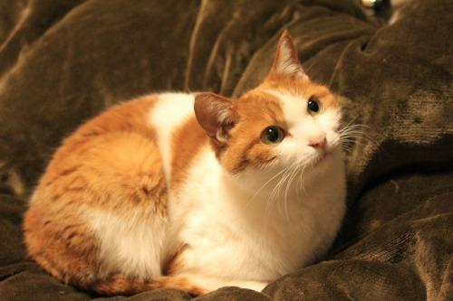 ブログNo.531(お蔵入り猫画像発掘!最終章)追加