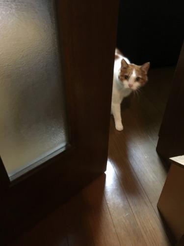ブログNo.539(お出迎え猫と宝物)1
