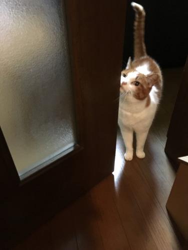 ブログNo.539(お出迎え猫と宝物)2