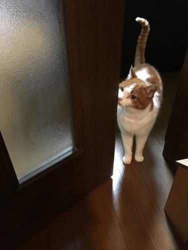 ブログNo.539(お出迎え猫と宝物)3