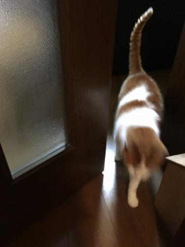 ブログNo.539(お出迎え猫と宝物)4