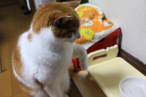 ブログNo.546(ご心配おかけしました&猫宅急便)22