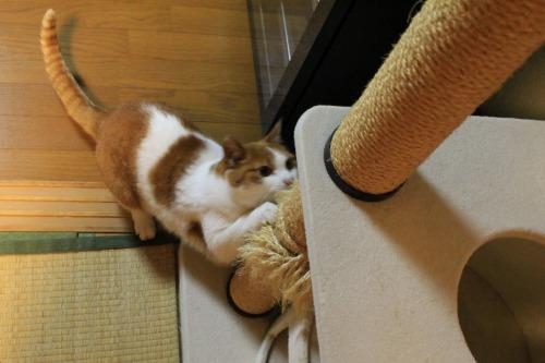 ブログNo.550(獲物に追いかけられる猫)1
