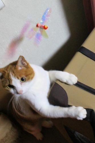 ブログNo.550(獲物に追いかけられる猫)2