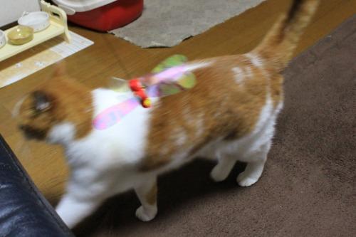 ブログNo.550(獲物に追いかけられる猫)4