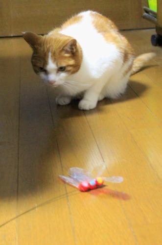 ブログNo.550(獲物に追いかけられる猫)13
