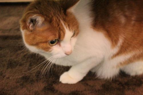 ブログNo.550(獲物に追いかけられる猫)14