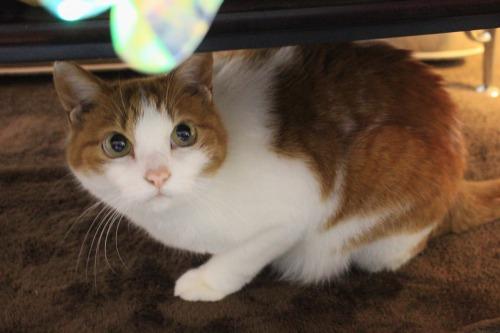 ブログNo.550(獲物に追いかけられる猫)16