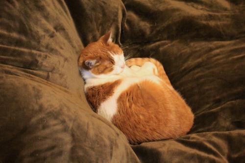 ブログNo.564(布団猫と春猫)1