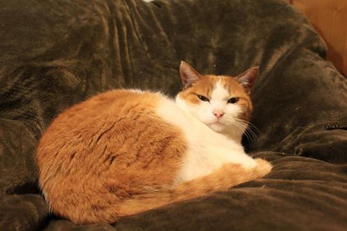 ブログNo.564(布団猫と春猫)3