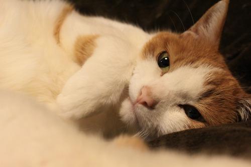 ブログNo.564(布団猫と春猫)9