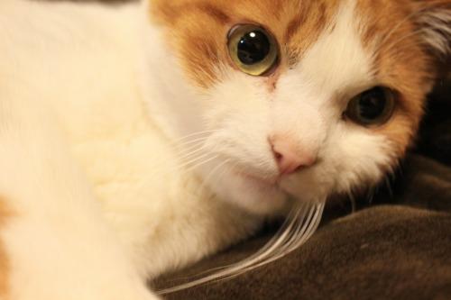 ブログNo.564(布団猫と春猫)10