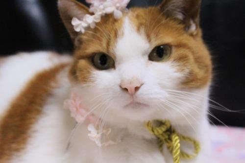 ブログNo.564(布団猫と春猫)11