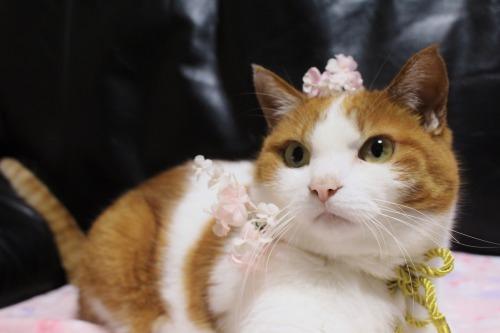 ブログNo.564(布団猫と春猫)13
