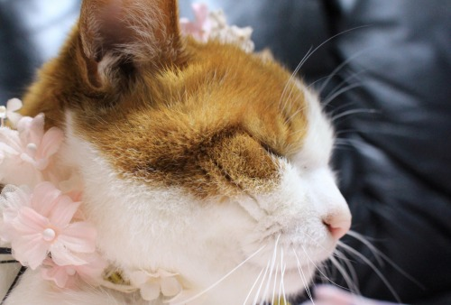 ブログNo.564(布団猫と春猫)14