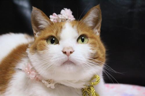 ブログNo.564(布団猫と春猫)15