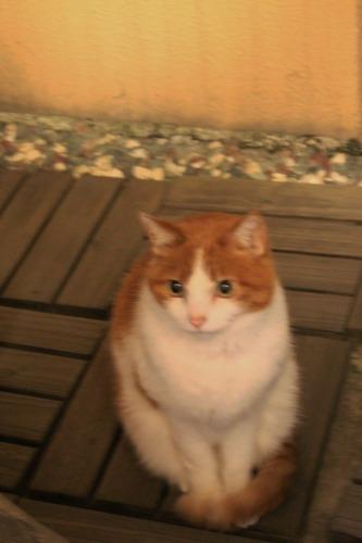 ブログNo.567(猫にまたたび)1