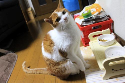 ブログNo.575(にゃ!鶏肉にゃん♪)13