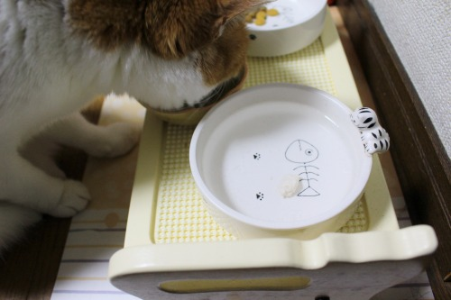 ブログNo.575(にゃ!鶏肉にゃん♪)18