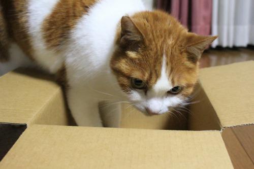ブログNo.541(箱猫と籠猫)2