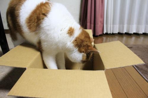 ブログNo.541(箱猫と籠猫)3
