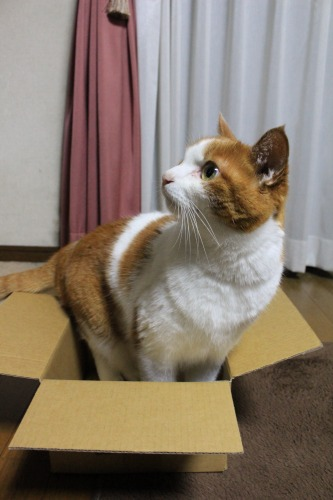 ブログNo.541(箱猫と籠猫)4