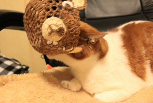 ブログNo.541(箱猫と籠猫)9