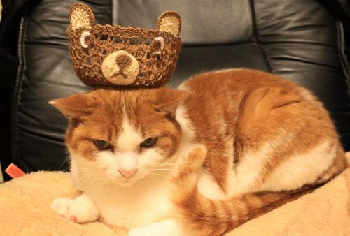 ブログNo.541(箱猫と籠猫)10