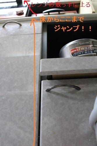 ブログNo.537(やっと、目撃!!)1
