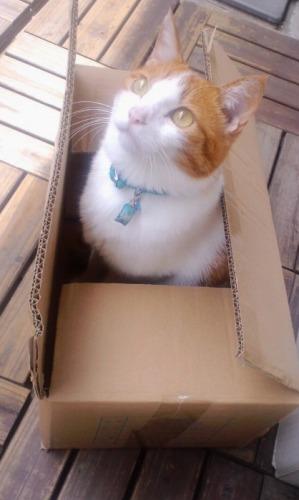 ブログNo.531(お蔵入り猫画像発掘!最終章)8