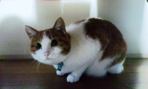 ブログNo.531(お蔵入り猫画像発掘!最終章)7