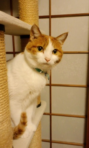 ブログNo.531(お蔵入り猫画像発掘!最終章)6