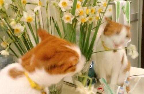 ブログNo.531(お蔵入り猫画像発掘!最終章)4