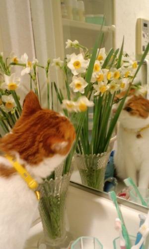 ブログNo.531(お蔵入り猫画像発掘!最終章)3